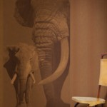 1_Annandale Paint & Wallpaper