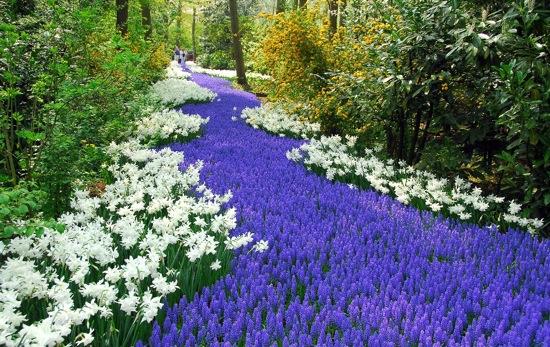 Holland – turismi keskpunkt kevadeti