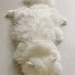 ivory-d-reams.tumblr.com/post/43097978924